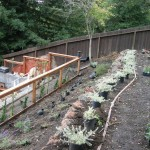 Redwood Fence and Plantings Installation