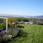 Green Roof Lawn & Plantings