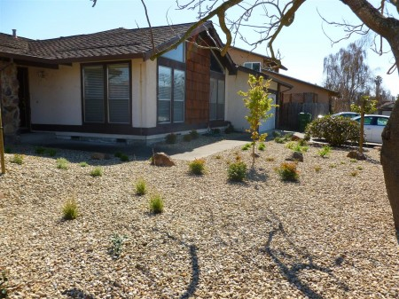 New Plantings, Boulders and Gravel Mulch