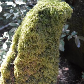 A moss covered stump