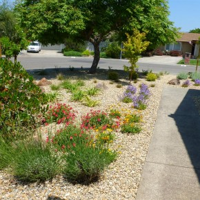 Low Maintenance Front Landscape