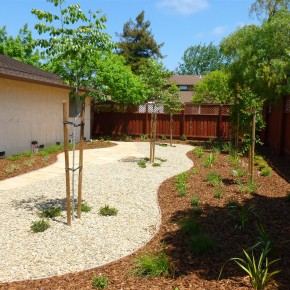 Gravel Mulch & Plantings