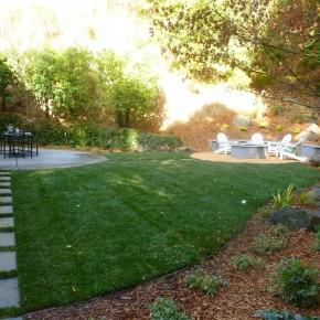 New dwarf fescue lawn