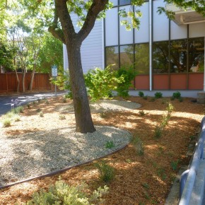 Decorative Gravel Mulch and Shade Plantings