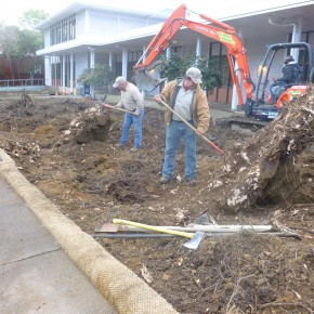 San Rafael project- tree and stump removal
