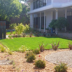 San Rafael project- commercial landscape installation