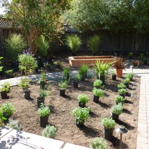 Sonoma Project- Plants Ready for Placement