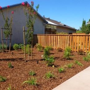 New front plantings